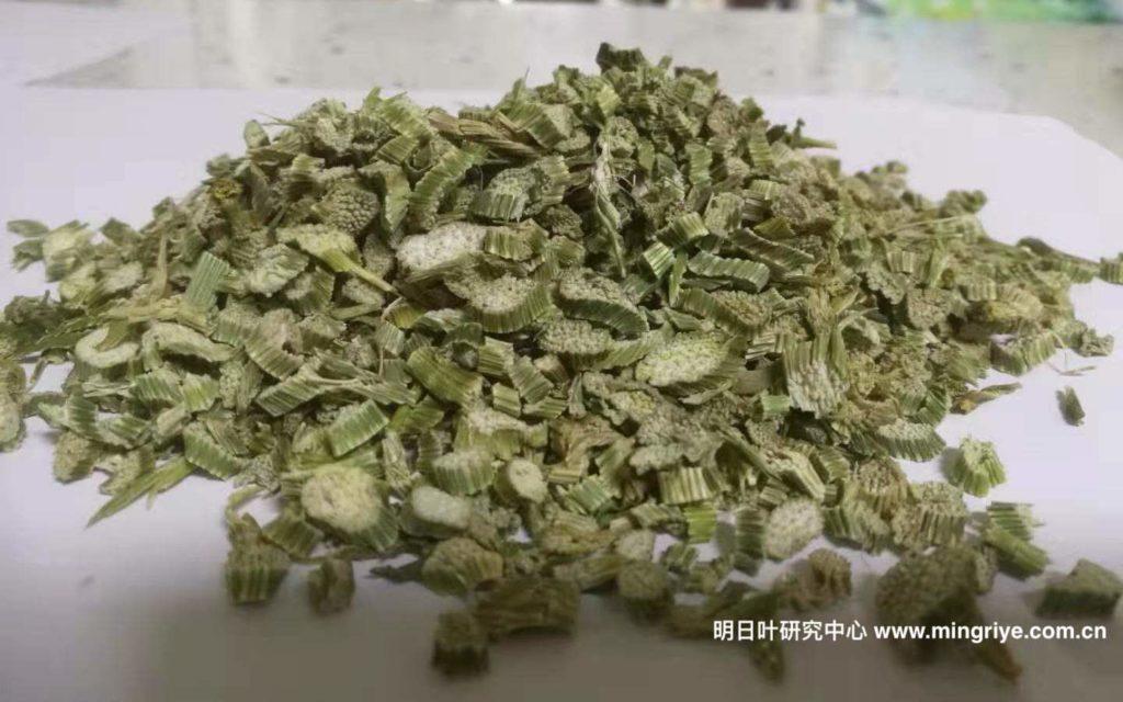 明日叶茶-茎茶